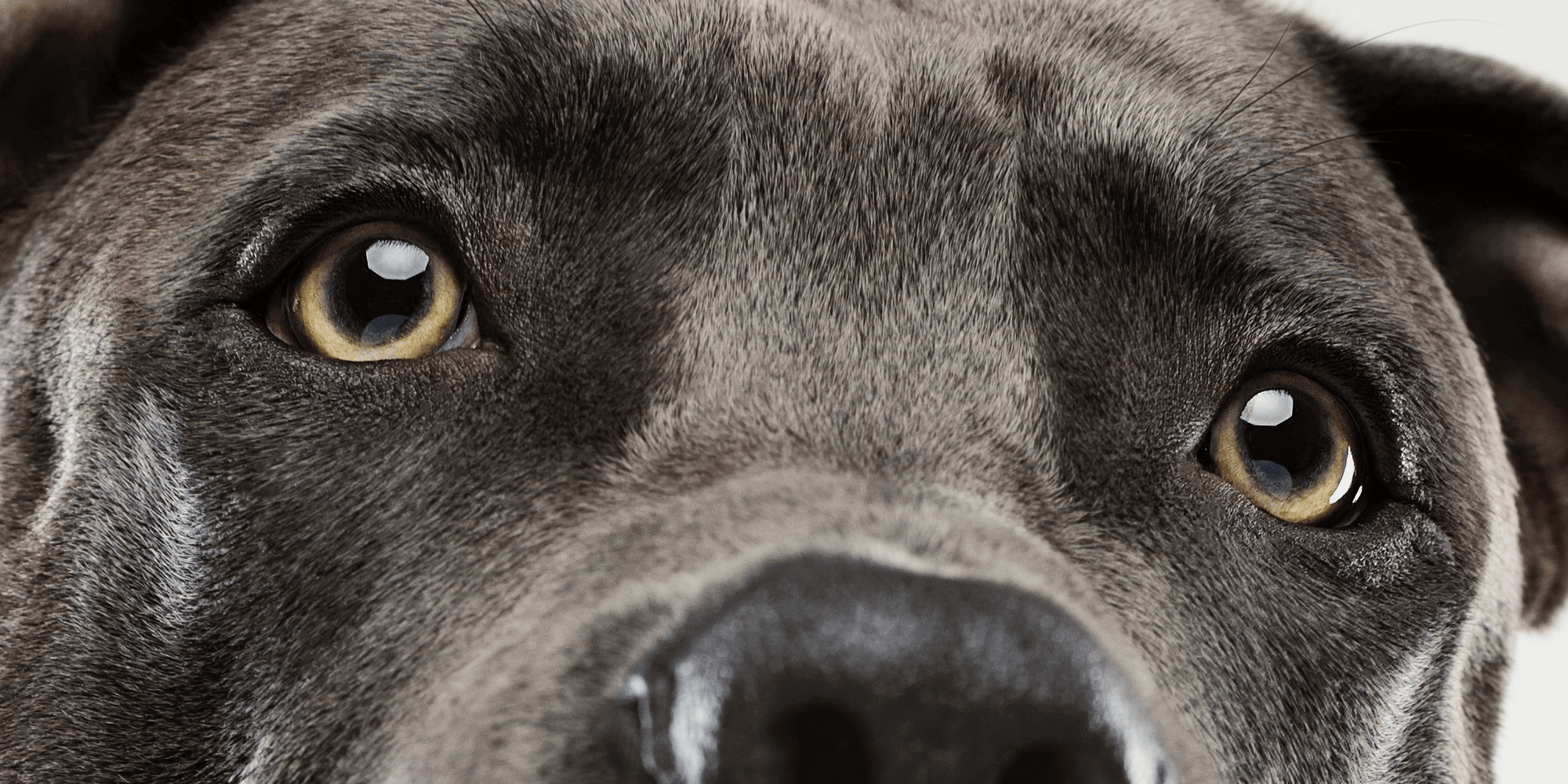 top brand agencies dog face closeup